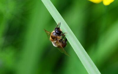 L'Homme et l'abeille, une histoire plurimillénaire racontée par la chimie et les poteries