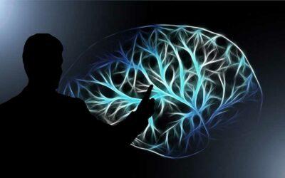 Le cerveau dans tous les sens