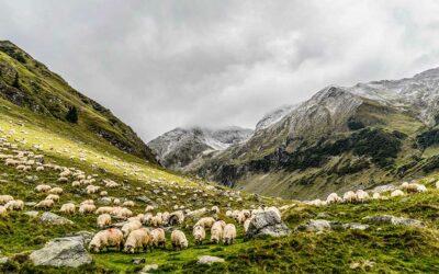 Des moutons et des hommes : histoire de la végétation méditerranéenne
